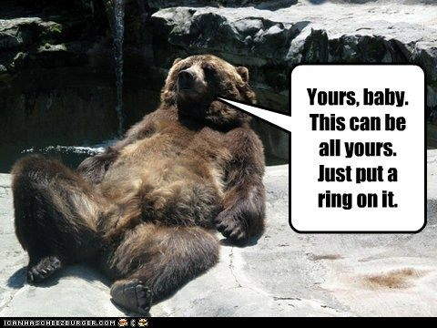 funny pets with captions | Funny Animal Captions - Animal Capshunz: Im a Fabulous Single Lady