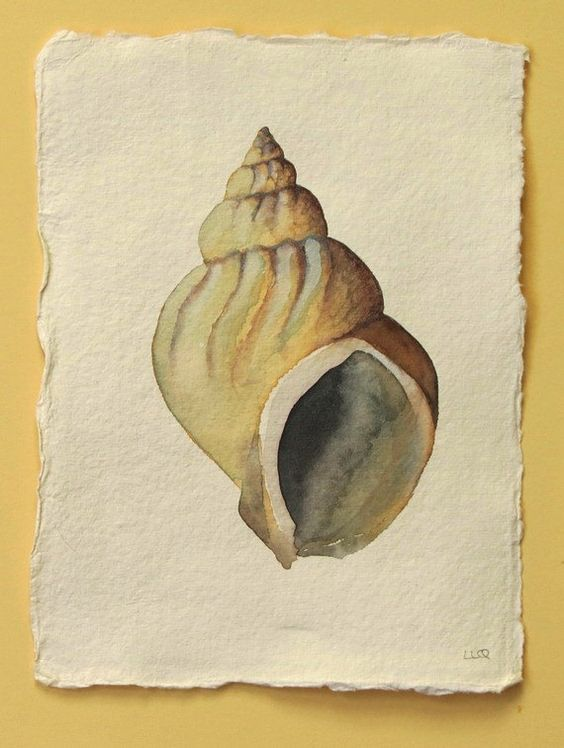 Sea shell whelk original watercolour illustration painting beach ocean coastal collection. £30.00, via Etsy.