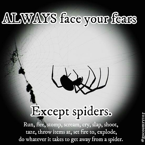 Yup! #spiders #funny #fears #spider #lol #haha #smile #fashionmagenet #fun #laugh