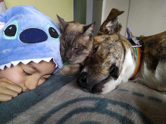 Joaquín duerme en casa junto a sus mascotas