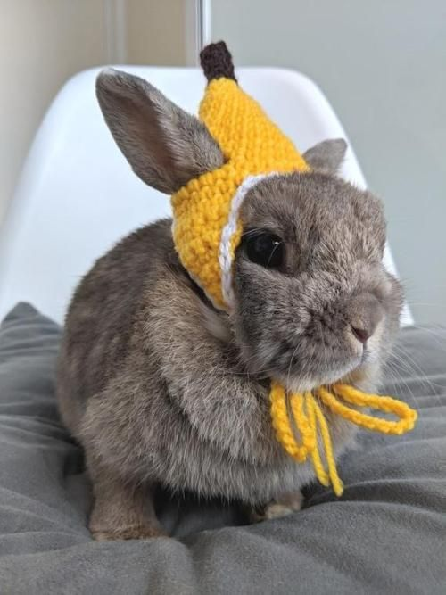 Banana Bunny Hateeeep How Sweet Is This Not Sure The Bunny