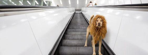 Wechselpräpositionen: Was macht der Löwe auf der Rolltreppe? Fotoprojekt: Ein Löwe in der Großstadt und im Schnee.