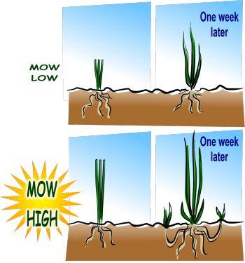 Mow High: Yard Garden, Healthy Grass, Easy Lawn, Beautiful Lawn, Maintenance Lawns, Lawn Care, Lawn Maintenance, Grass Yard