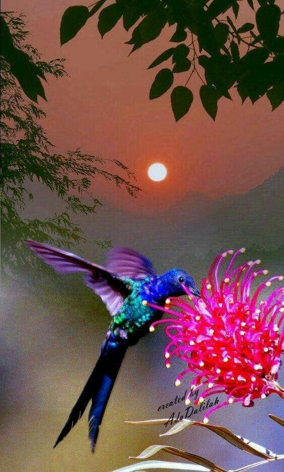 Ivy Nascimento On En 2020 Oiseaux Colores Fond Ecran Gratuit Paysage Beaux Oiseaux