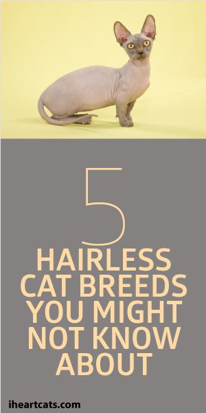 5 Hairless Cat Breeds You Might Not Know About