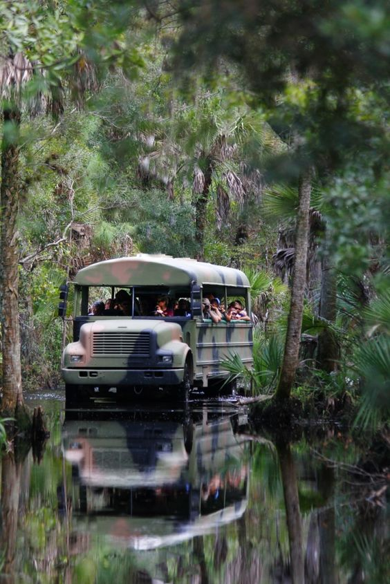 Babcock Wilderness Adventures near Fort Myers, FL. Tours last for around 90 minutes and include plenty of information and hopefully a few sightings of alligators, panthers, cougars, deer and wild boar along with the resident cracker cattle and horses. Bird sightings may include beautiful red shouldered hawks, wild turkeys, egrets, herons, sandhill cranes and bald eagles.
