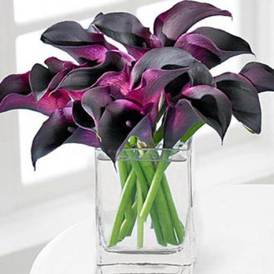Фиолетовые каллы: