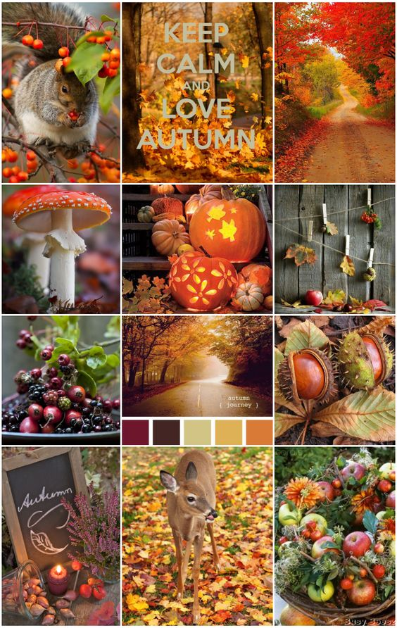 Farb-und Stilberatung mit www.farben-reich.com - Autumn Scenes: Autumn- Fall colors|Moodboards.|Busy Beesz