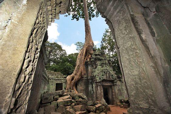 Ancient Trees Have Overgrown Ruins at Ta Prohm, Angkor Wat, Cambodia