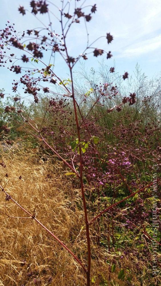 Flowers in the garden of Hauser & Wirth, Somerset