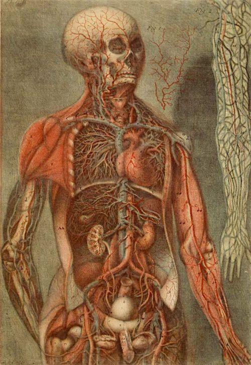 ¿precisión científica o morbo? grabados anatómicos...