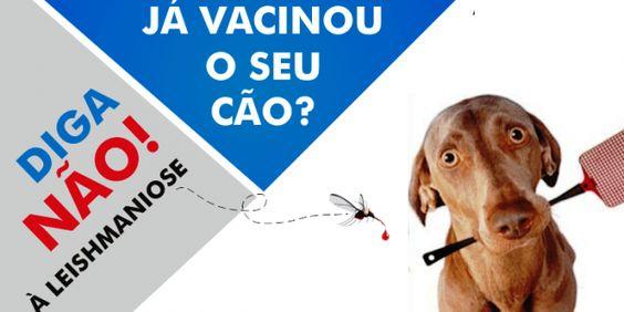 Já vacinou o seu cão? Atenção à Leishmaniose
