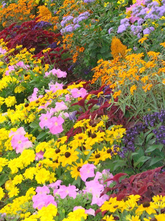 flowers Jardin du Luxembourg