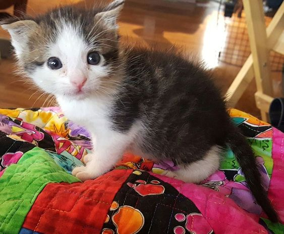 Raising Underage Kittens As A Foster Volunteer Is My Favorite Thing Join Me Where There Are Heart Warming Photos Storie In 2020 Kitten Season Foster Kittens Animals