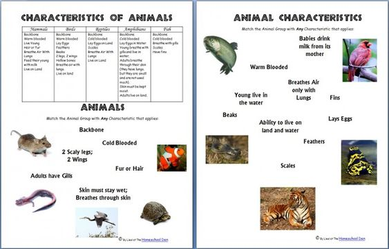 Science Worksheets: Animals and Their Characteristics ...