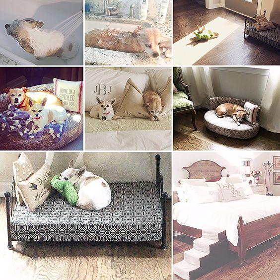 Designing for Your Debutante Doggie
