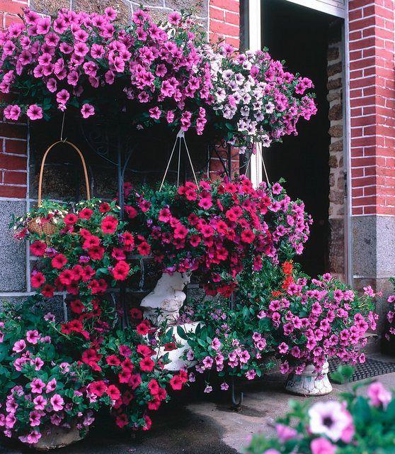 Petunie Surfina In 2020 Floral Floral Wreath Red