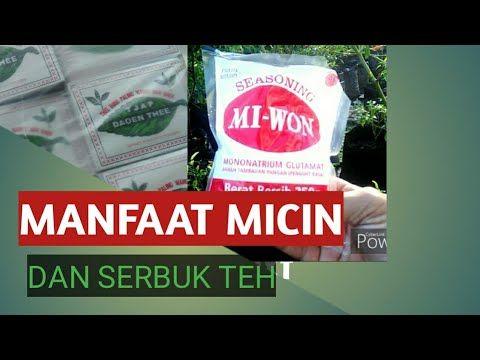 Manfaat Micin Dan Serbuk Teh Dalam Pembuatan Pupuk Alami Wahyudi Yudi Youtube Perkebunan Sayur Ide Berkebun Tanaman