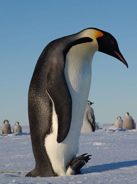 Penguin Urinates On Bride's Dress - News - Bubblews