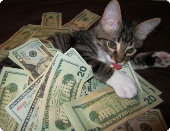 kitten licking money dollars