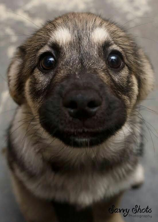 Boop the adorable wittle snoot - Imgur: