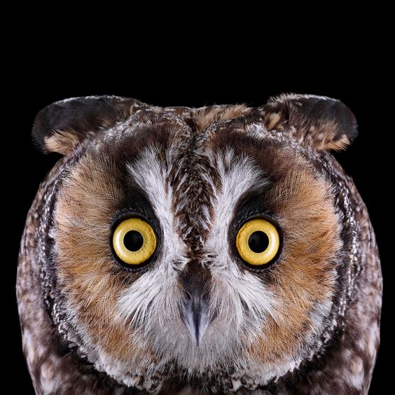Who's Who | Audubon
