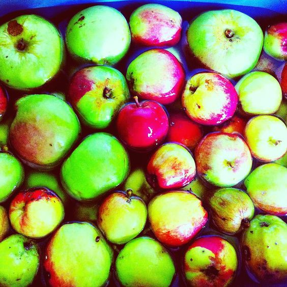 "A whole bucket load of dinky little crab apples hand picked from the apple tree in the garden- this is not even 1/3 of what's still on the tree! Not sure how to get a way up there but we will puzzle ourselves over it. Suggestions welcome- and no we can't ""shake"" the tree as someone said- wish it was that easy though! So these apples are getting their bath in this picture- rinsed clean to make.... APPLE PIE! Is there anything better than pie? I think not. More pics to follow of the results…"