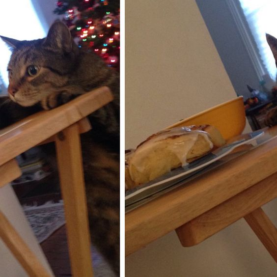 People Are Dying Over This Cat's Face After He Was Caught Stealing A Cinnamon Bun