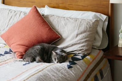 Can't Sleep? You Are One Click Away From Relief | Apartment Therapy