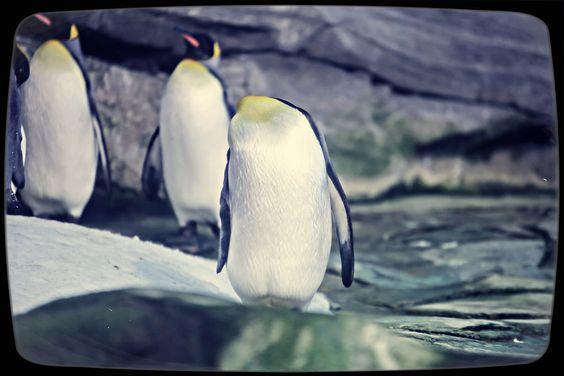 https://flic.kr/s/aHskjnibFi   [Pinguine in Bochum und Berlin]