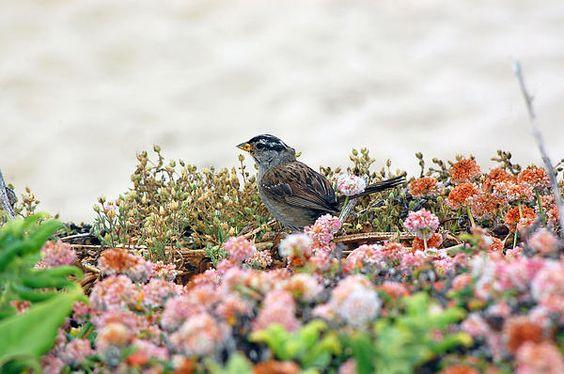 Beach Sparrow by Debra Thompson