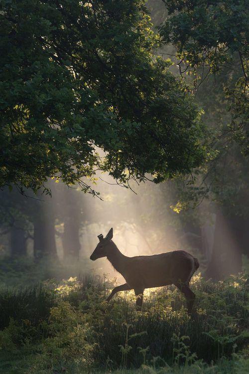 Image de nature