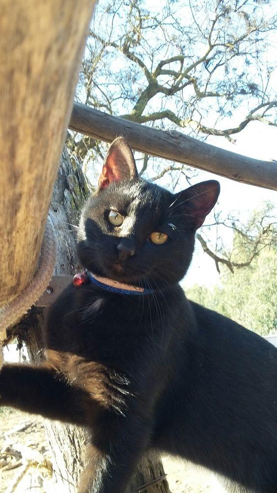 Black cat. La nueva vida de mi gato luego de que lo abandonaran bajo un puente.