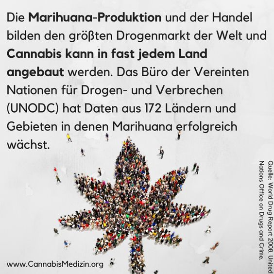 Cannabis ist extrem widerstandsfähig. Im Gegensatz zu dem Glauben, dass Cannabis nur in warmen Regionen wächst, kann man Cannabis auch ohne Probleme in unserer oder sogar kälteren Klimaregionen anbauen.  Cannabis ist so besonders, dass man beim richtigen Anbau nicht mal Pestizide, Fungizide oder Herbizide benutzen muss um die Pflanze zu schützen.  Eine so einzigartige Pflanze - die aber leider in Vergessenheit geraten ist.