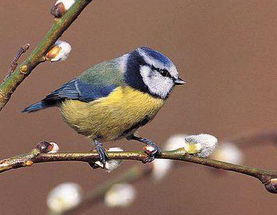VOGELS ZIEN EN LEREN KENNEN IN HET VOORJAAR. Wat zit daar op die tak? Is dat een koolmees? Hoor ik nu het tikken van een roodborst? Steeds meer mensen trekken erop uit om vogels te observeren. Op gevarieerde wijze maakt u kennis met de vogels rondom uw huis, in tuin en park, in bos en weiland. Er gaat een wereld open en u zult versteld staan wat u aan vogels herkent na afloop van deze cursus. Datum: dinsdag 12 en 26 maart; 9 en 23 april van 19.30 - 21.30 uur. Prijs: € 69,00