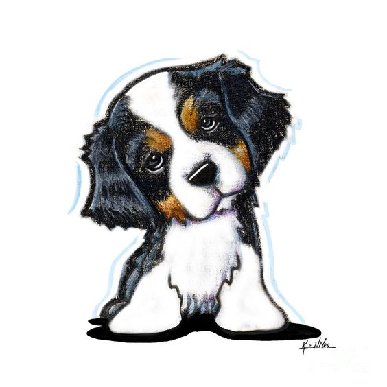 Cavalier King Charles Drawing - Cavalier King Charles Spaniel by Kim Niles