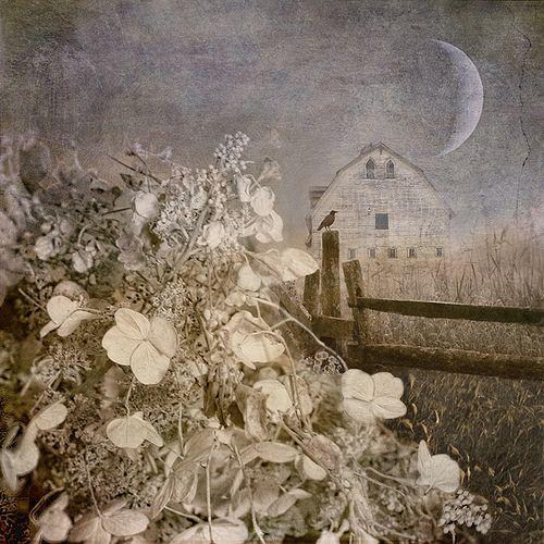 Hydrangea Hill | by BooBooetmoi