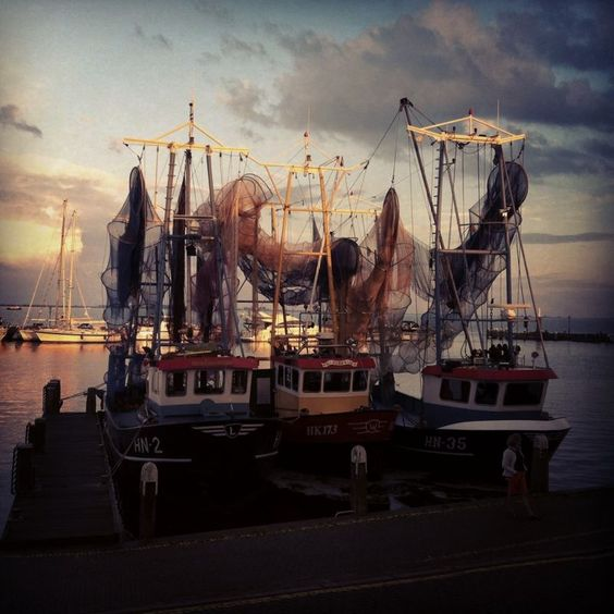 De uitgedunde visservloot