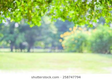 Blurred Trees With Bokeh In Park Background Spring Summer Season Nature Backgrounds Garden Park Nature