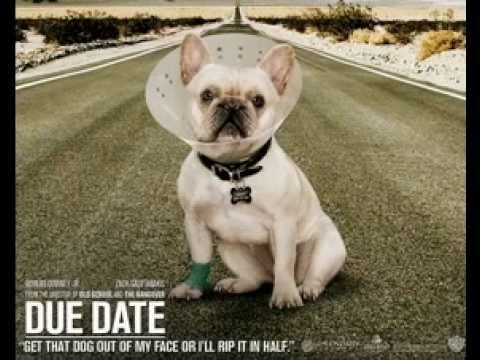 Due Date 2010 Old Man Youtube Dogs Dog Movies Dog Wallpaper