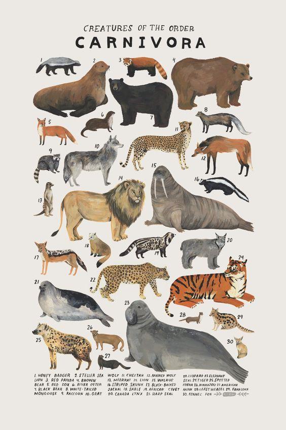 Etsy find! Animal art prints by illustrator Kelsey Oseid #nursery