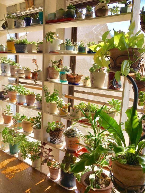 planters shelve near the window #gardenIdeas #garden #gardening #plants #homeDecor #indoor #shelves