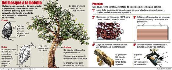 """Twitter Carlos Aguila @Carlos7alella. #corcho #enoinfografia. """"Del bosque a la botella, la historia del corcho"""". El alcornocal y sus partes y el proceso de fabricación de un tapón de corcho."""