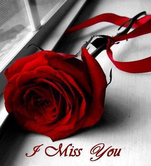 I miss you rose | Miss you | Pinterest | Ich Vermisse Dich ...