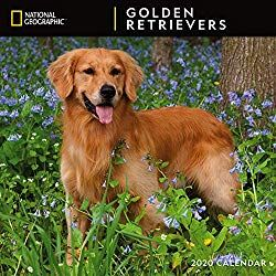 National Geographic Golden Retrievers 2020 Wall Calendar 2020
