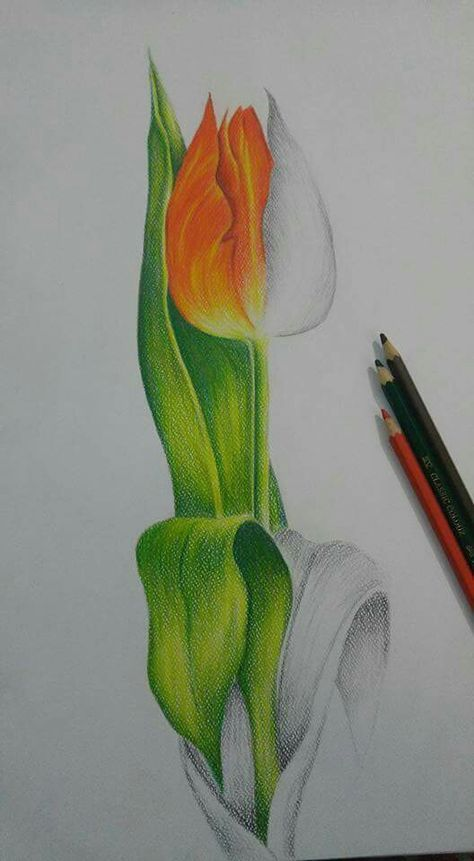 Medium Pencil Colors With Images Watercolor Pencil Art