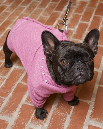 (Cardigan Dog Coat Transform a wool cardigan into a charming dog coat like the one Francesca, Martha's other Frenchie, wears here. Watch the Video: Author Joanna Osborne and Martha make this craft. Get Instructions for Making a Cardigan Dog Coat
