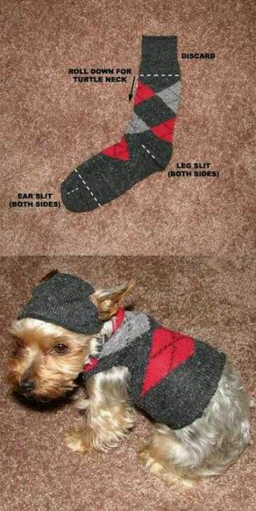 Doggy fashion lol cute