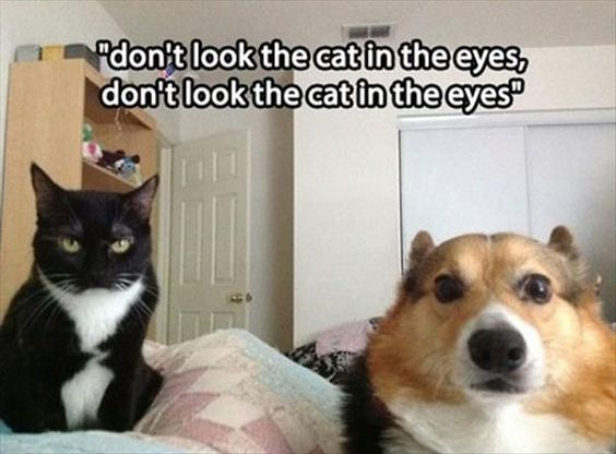 Warning!!!!!!!!!....@@@@@@@@@@@@     Dump A Day Attack Of The Funny Animals - 32 Pics