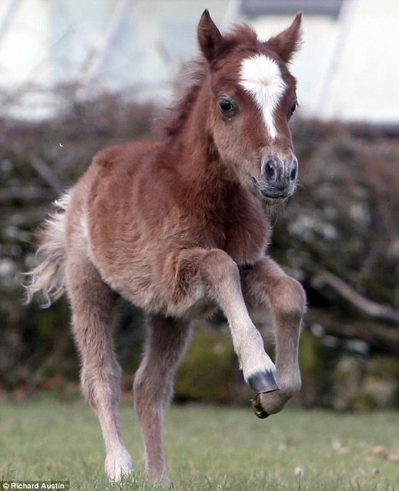 Adorable baby foal explores the great outdoors for the ...